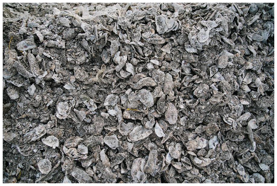 Bulk Oyster Shells it 39 s Oyster Shells